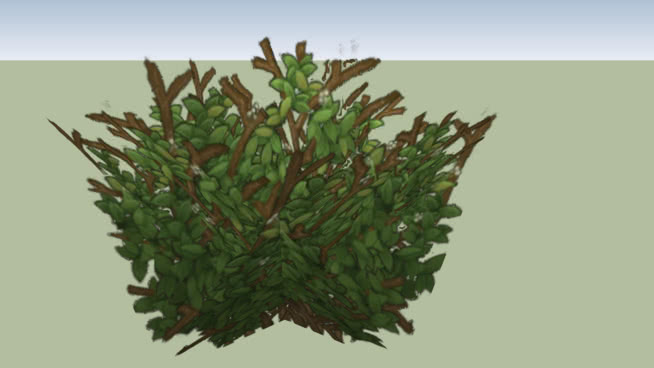 Free Trees, Bushes and Flowers Vray Materials for Sketchup